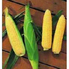 Кукуруза сахарная Растлер F1 /8 г/ *Антария*