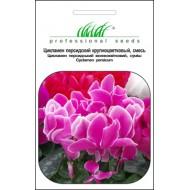Цикламен персидский смесь /5 семян/ *Профессиональные семена*