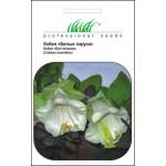 Кобея Белые паруса /0,3 г/ *Профессиональные семена*