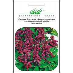 Сальвия пурпурная /20 семян/ *Профессиональные семена*