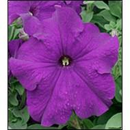 Петуния Виртуоз Blue /50 семян/ *Kitano Seeds*