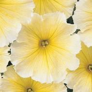Петуния Мираж F1 желтый (yellow) /50 семян/ *Pan American*