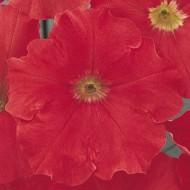 Петуния Мираж F1 красный (red) /50 семян/ *Pan American*