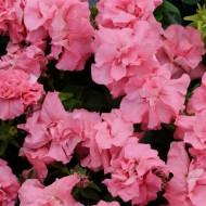 Петуния Дуо F1 розовый сатин (satin pink) /50 семян/ *Pan American*