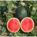 Арбуз Шуга Бэйби /0,5 кг/ *Rem seeds*
