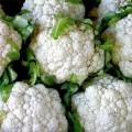 Капуста цветная Снежный шар /0,5 кг/ *Rem seeds*