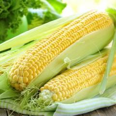 Кукуруза сахарная SX-659 /1 кг/ *Satimex*