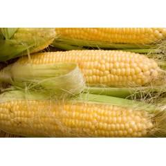Кукуруза сахарная Андреа F1 SX-654 /1 кг/ *Satimex*