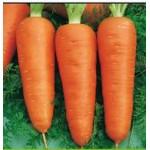 Морковь Кампино /0,5 кг/ *Satimex*