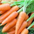 Морковь Карлена /0,5 кг/ *Satimex*