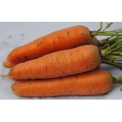 Морковь Курода /0,5 кг/ *Rem seeds*