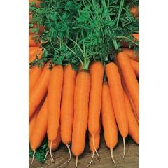 Морковь Нантская /0,5 кг/ *Rem seeds*