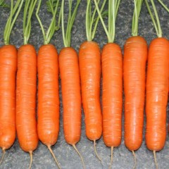 Морковь Натофи /0,5 кг/ *Satimex*