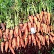 Морковь Роял Шансон /0,5 кг/ *GSN*