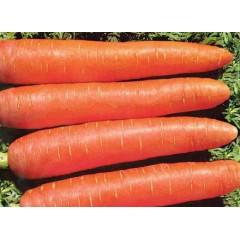 Морковь Памела /0,5 кг/ *Satimex*