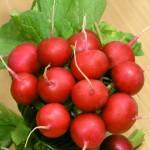 Редис Сора /0,5 кг/ *Rem seeds*