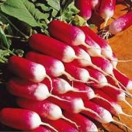 Редис Французкий завтрак /0,5 кг/ *Rem seeds*