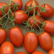 Томат Рома /0,5 кг/ *Rem seeds*