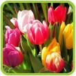 Луковичные цветы - осенняя коллекция