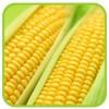 Кукуруза сахарная (профпакет)