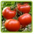 Cемена овощей (овощных культур)