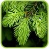 Удобрения для вечнозеленых, хвойных, декоративных культур и газона