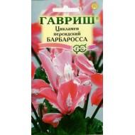 Цикламен персидский Барбаросса /3 семечка/ *Гавриш*