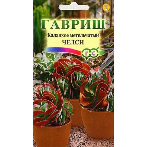Комнатные растения из семян в домашних условиях
