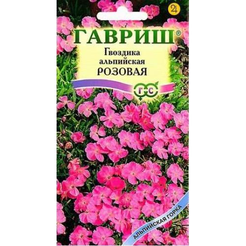 Гвоздика альпийская цветов