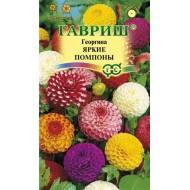 Георгина Яркие помпоны /0,2 г/ *Гавриш*
