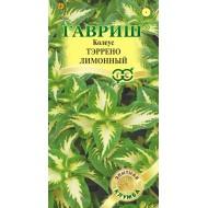 Колеус Тэррено лимонный /5 семян/ *Гавриш*