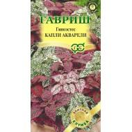 Гипоэстес Капли акварели /5 семян/ *Гавриш*