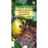 Пассифлора четырехгранная Гигантская гранадилла /5 семян/ *Гавриш*