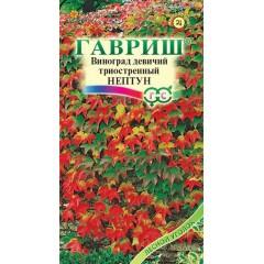 Виноград триостренный Нептун /5 шт/ *Гавриш*