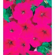 Петуния Амфора Deep Rose /500 драже/ *Kitano Seeds*