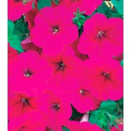 Петуния Амфора Deep Rose /1.000 драже/ *Kitano Seeds*