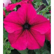 Петуния Виртуоз Ruby /500 семян/ *Kitano Seeds*