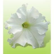 Петуния Ямамото White /250 драже/ *Kitano Seeds*