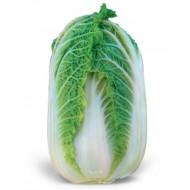 Капуста пекинская Зена F1 /2.500 семян/ *Kitano Seeds*