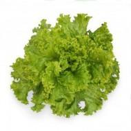 Салат KS 129 F1 /5 г/ *Kitano Seeds*