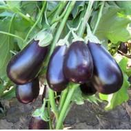Баклажан Прадо F1 /250 семян/ *Kitano Seeds*