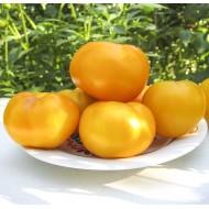 Томат KS 10 F1 /500 семян/ *Kitano Seeds*
