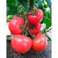 Томат KS 14 F1 /1.000 семян/ *Kitano Seeds*