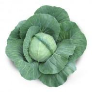 Капуста белокочанная Акира F1 /2.500 семян/ *Kitano Seeds*