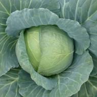Капуста белокочанная Хонка F1 /1.000 семян/ *Kitano Seeds*