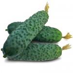 Огурец KS 90 F1 /250 семян/ *Kitano Seeds*