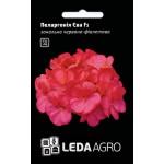Пеларгония Ева F1 /5 семян/ *LedaAgro*