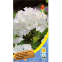 Пеларгония белая /8 семян/ *Moravoseed*