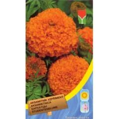 Бархатцы прямостоячие оранжевые /0,5 г/ *Moravoseed*