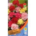 Гвоздика садовая смесь /0,25 г/ *Moravoseed*